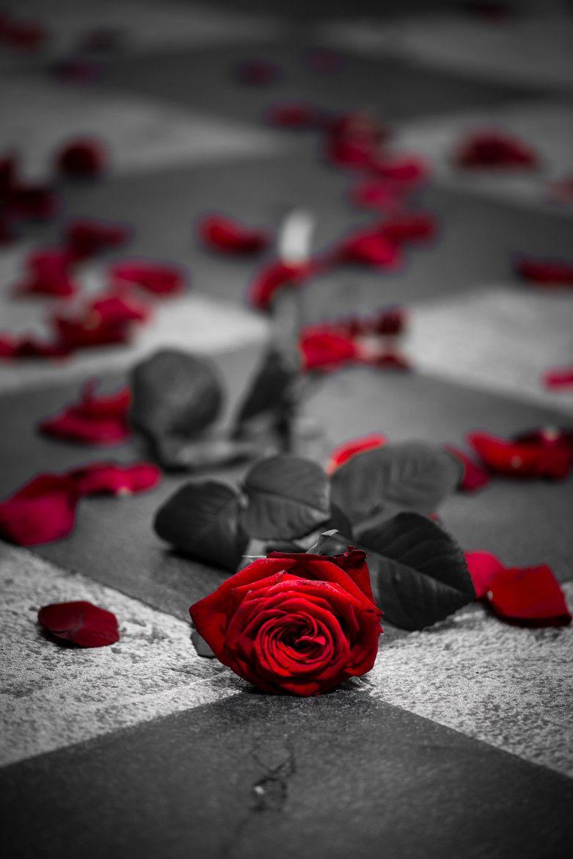 цветные фотографии с белыми и черными розами ваш