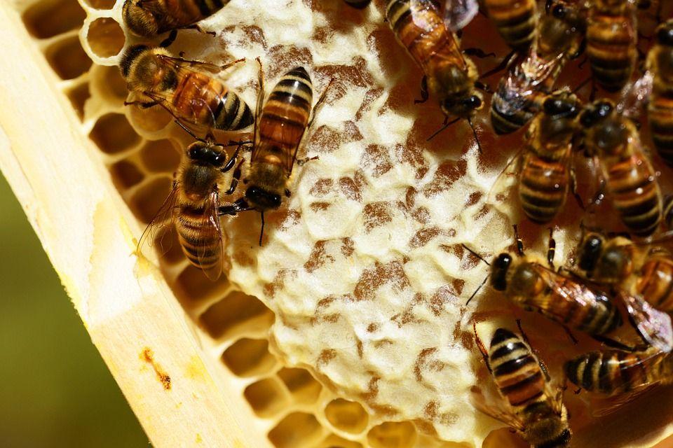 Il miele e le nostre piccole amiche! Il miele : una risorsa naturale preziosissima! Non è solo un'ottima alternativa a un dolcificante naturale...