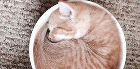 15 dingen die alleen katten(baasjes) begrijpen   Fashionlab