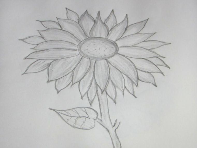 Disegni facili da copiare realizzati matita idea girasole for Disegni facili da disegnare a matita
