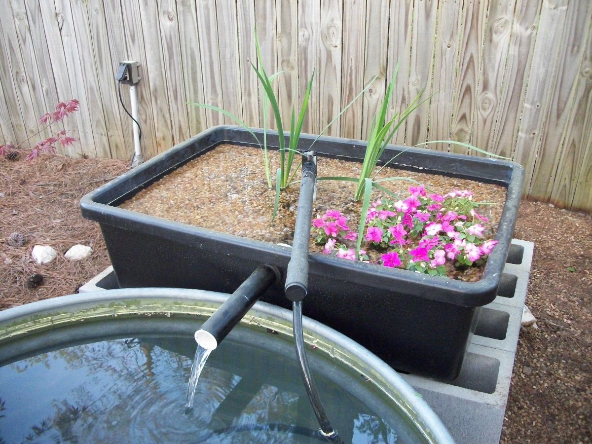 Bog filter build aquarium advice aquarium forum for Small pond filter design