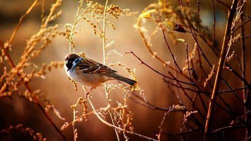 rosiesdreams: Sparrow was sighted | Красивые птицы, Обои с ...