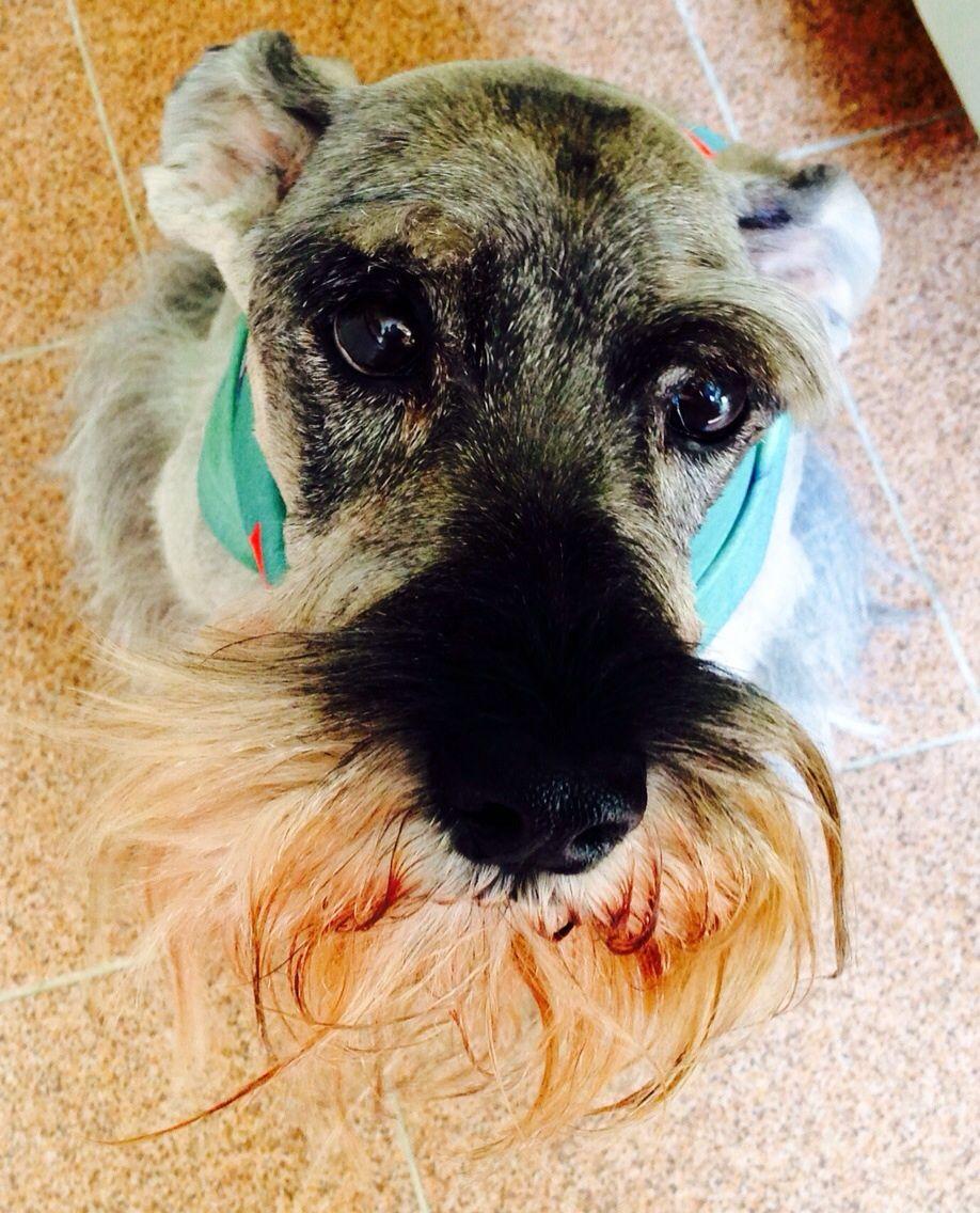 Cães e Gatos: Brasil tem a segunda maior população de animais domésticos do mundo   Foto: Arquivo pessoal