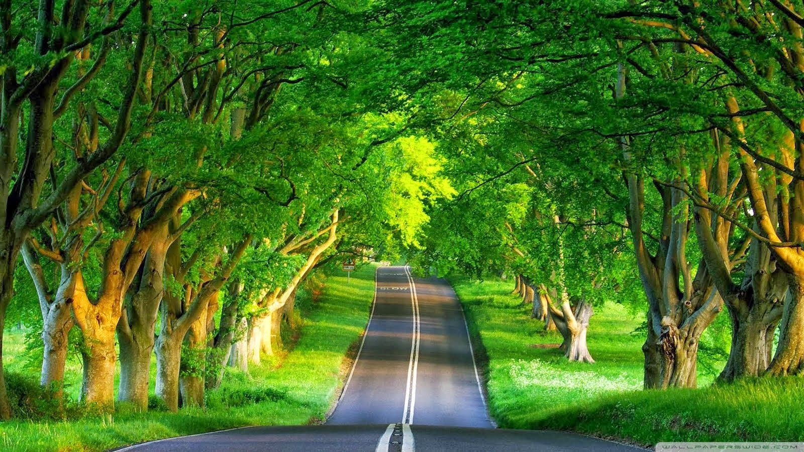 Most Beautiful Green Nature Wallpapers In The World Images Qg1 Jpg 1600 900 Nature Desktop Hd Nature Wallpapers Scenery Wallpaper