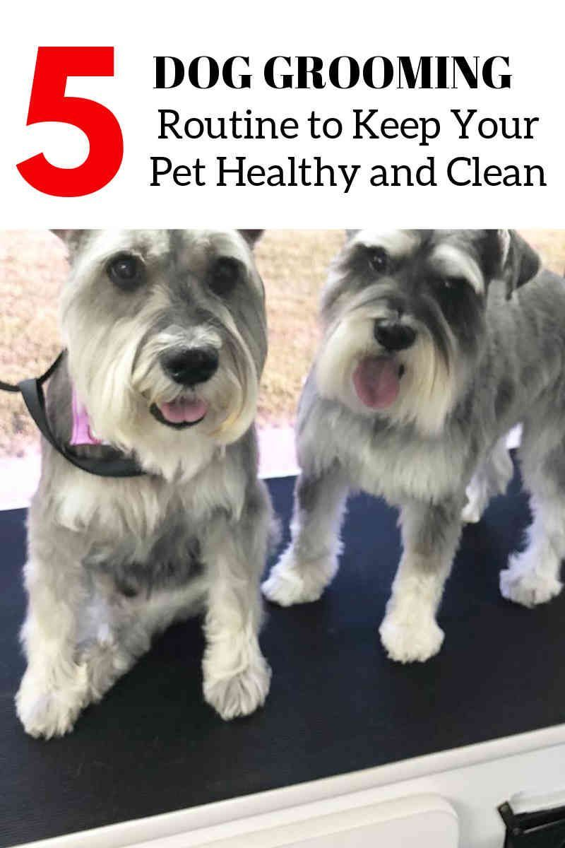 Dog Grooming How Often Should You Clean That Dog Dog Grooming Dog Grooming Diy Dog Groomers