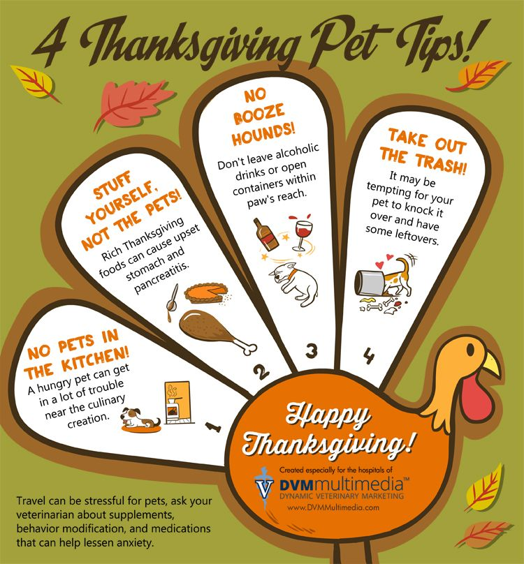 4 Thanksgiving Pet Tips Infographic by Sugar the Golden Retriever