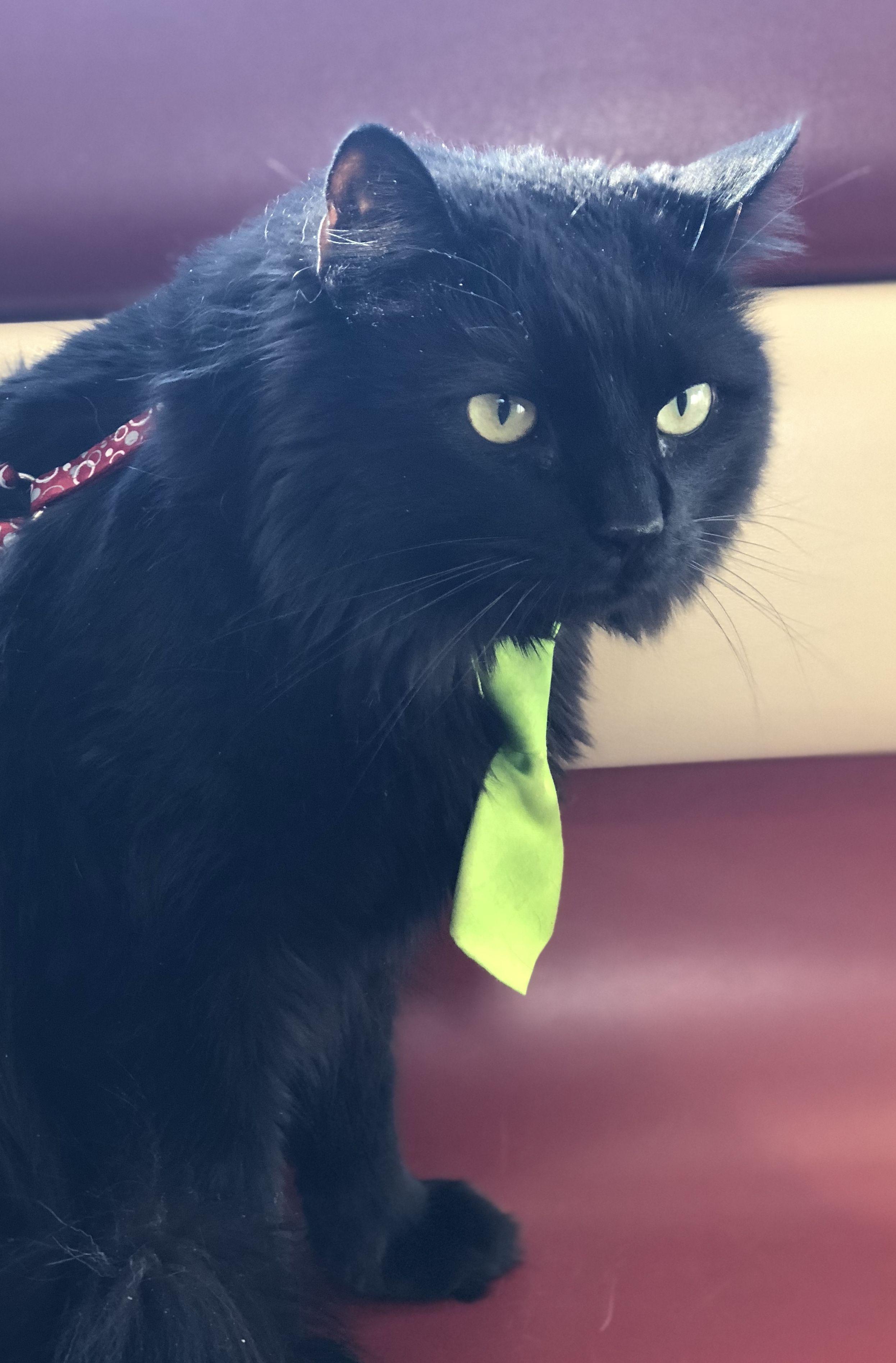Joker Black Cat Lovers Black Cat Lover Funny Cat Pictures Black Cat