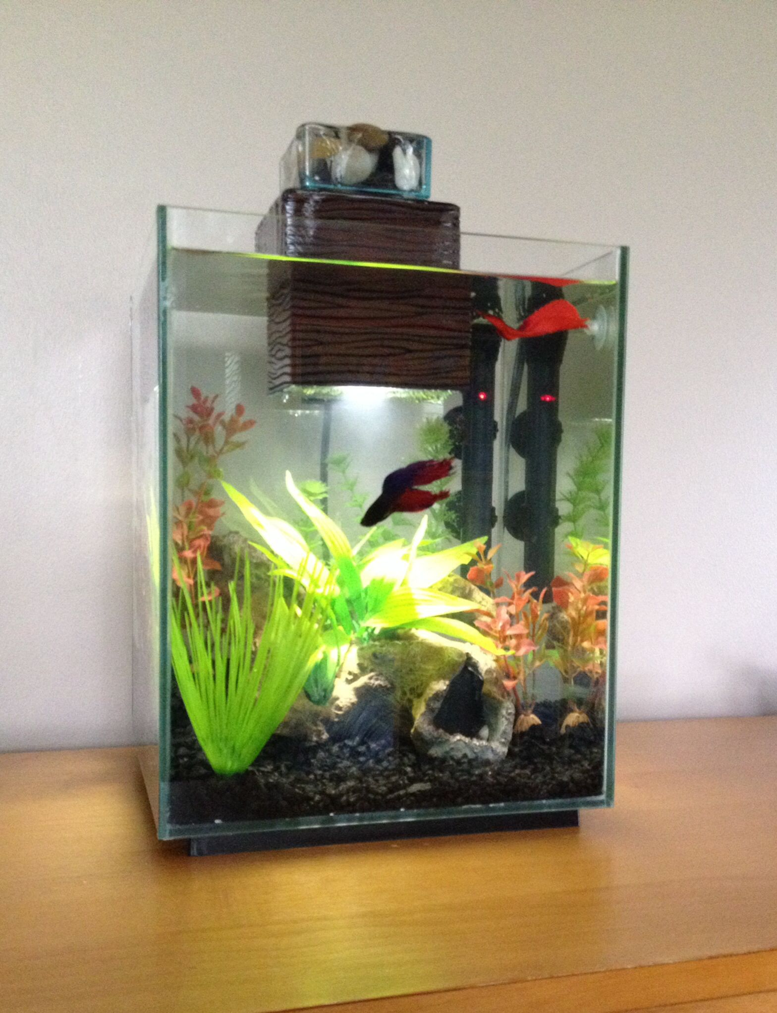 My 5 Gallon Betta Tank Setup Fishy Betta Tank Betta Betta Fish