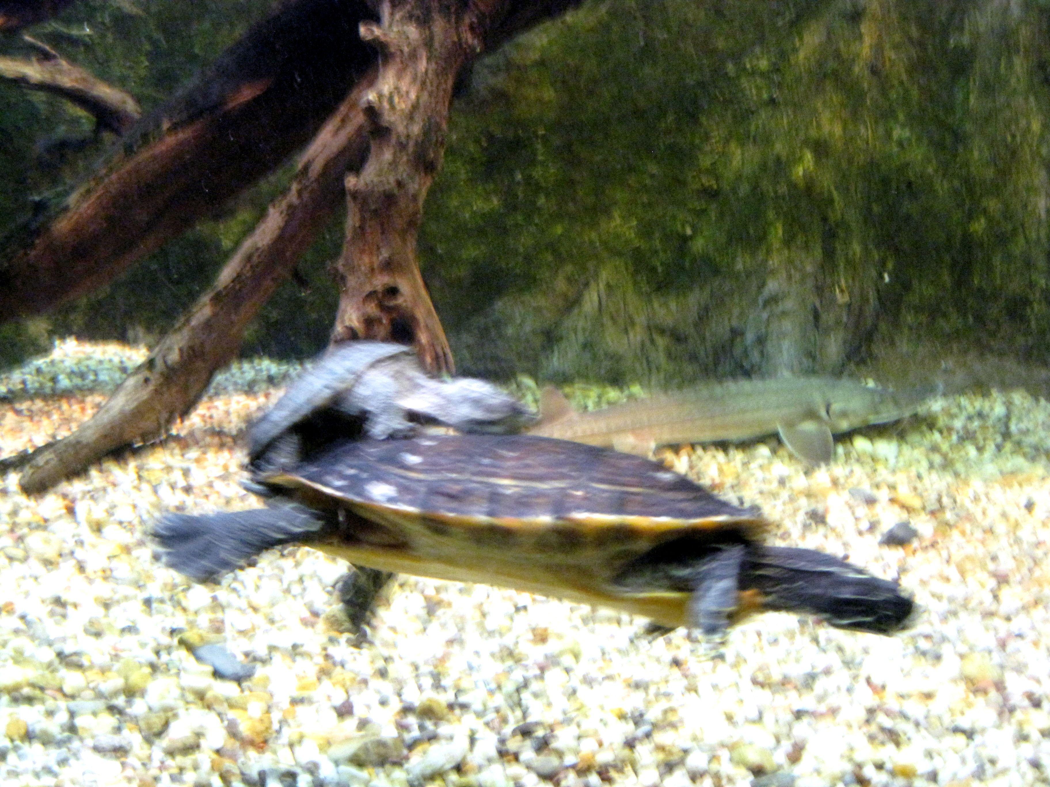 Piggy backing at the DC aquarium RAM s Animal Friends