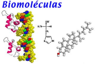 biomoleculas - Buscar con Google | Ramas de la quimica, Neurotransmisores,  Seres vivos