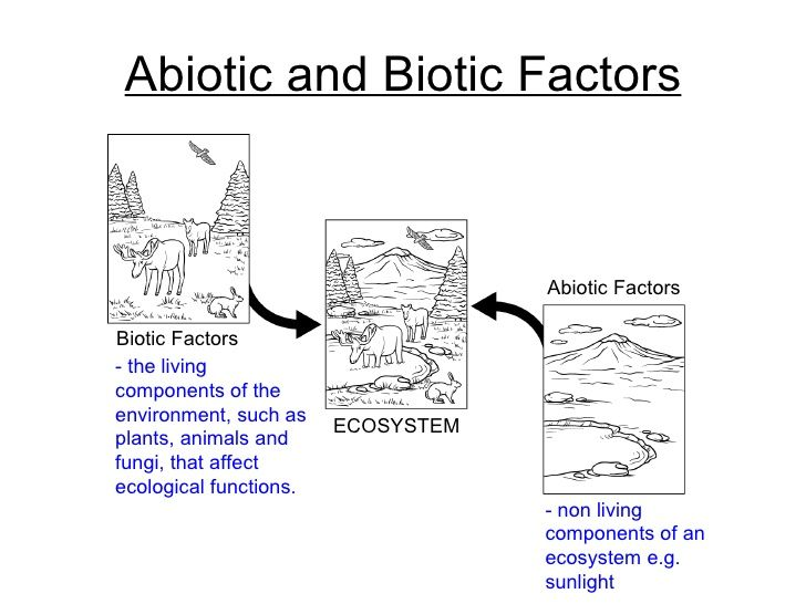 Ecology Biotic And Abiotic Factors Worksheet Google Search With
