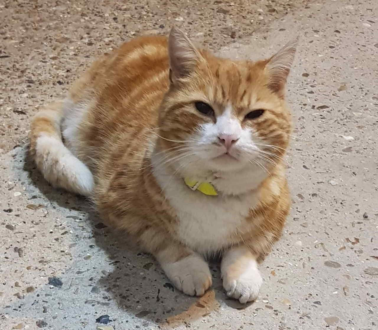 Gillingham train depot cat goes missing can you help