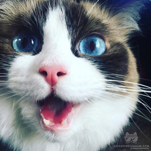 From @summerqueenkitten: me when I see a schrimp #catsofinstagram [source: http://ift.tt/2a5J0Bq ]