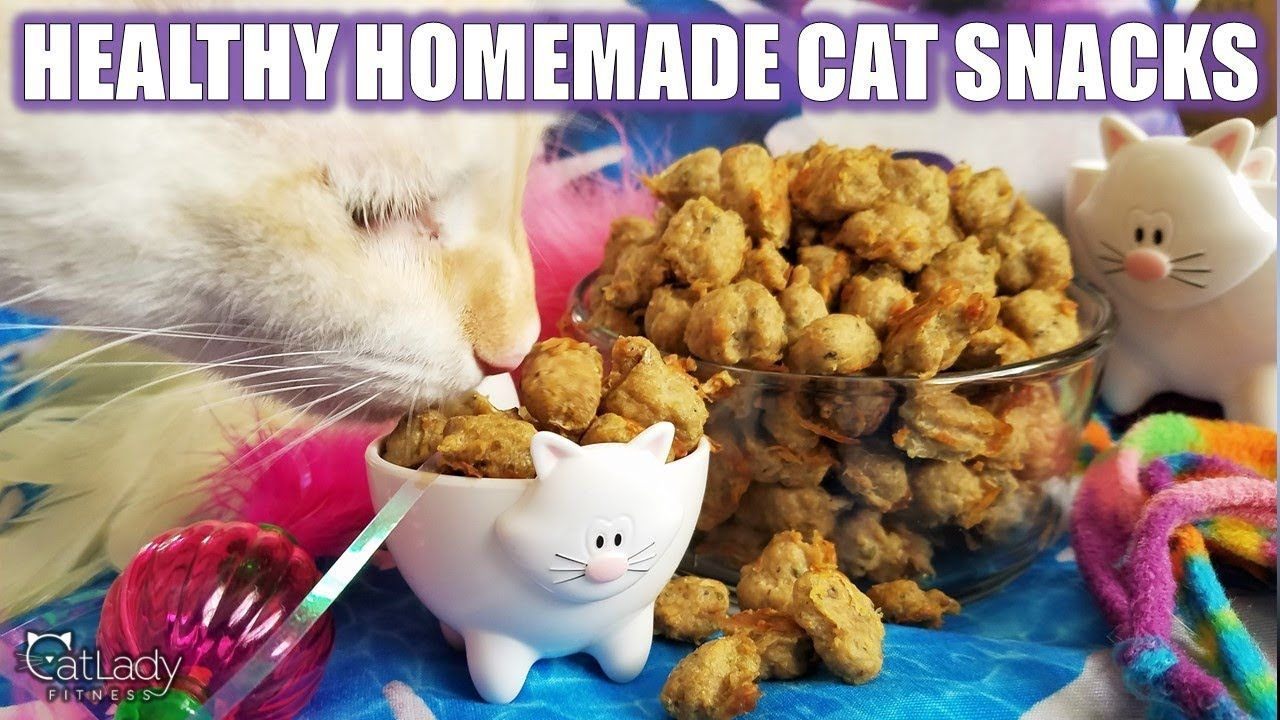 How To Make The Best Homemade Kitty Treats Grain Free High Protein Cat Recipe Youtube Cat Treats Homemade Cat Treats Cat Snacks