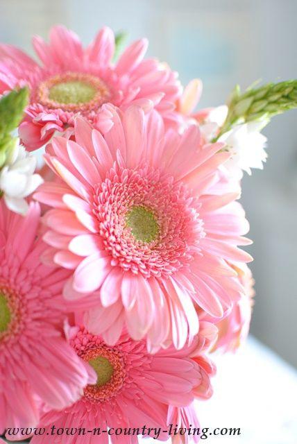 Pink Daisy Beautiful Gorgeous Pretty Flowers Beautiful Flowers Pink Flowers Flower Pictures