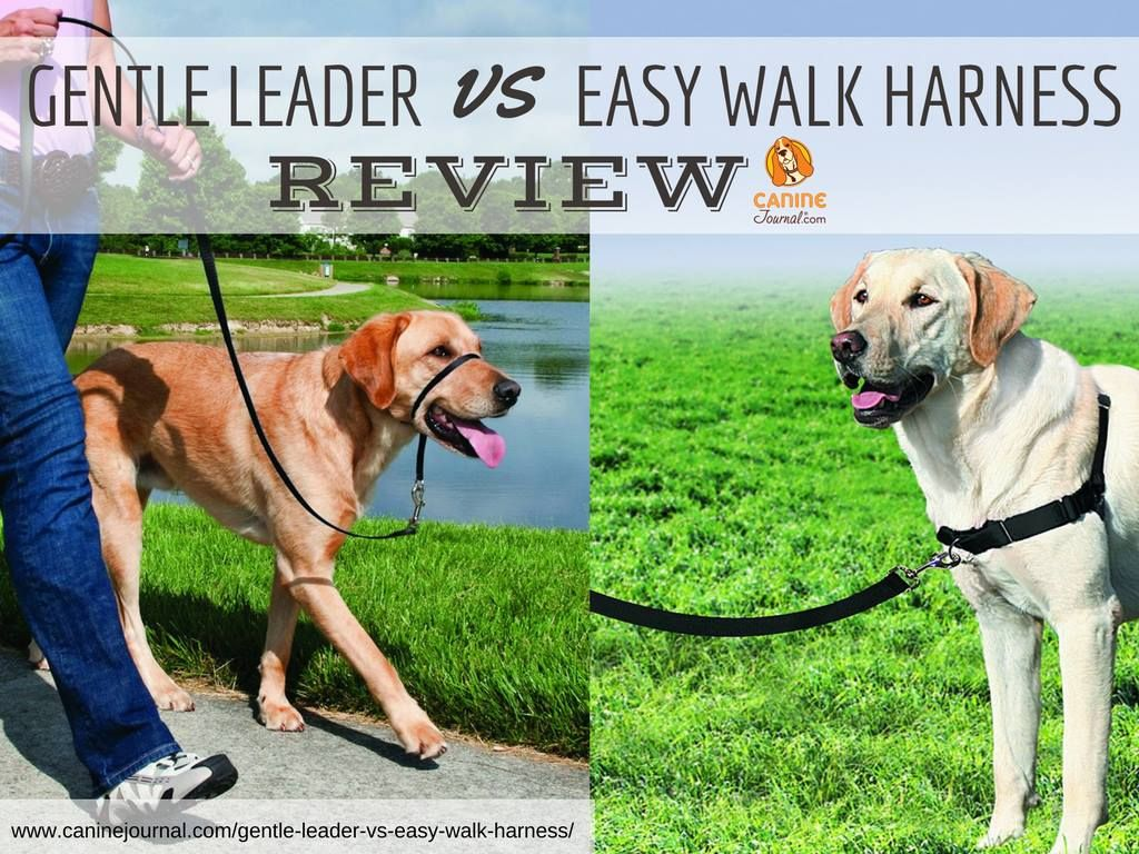 Gentle leader vs easy walk harness which should you pick