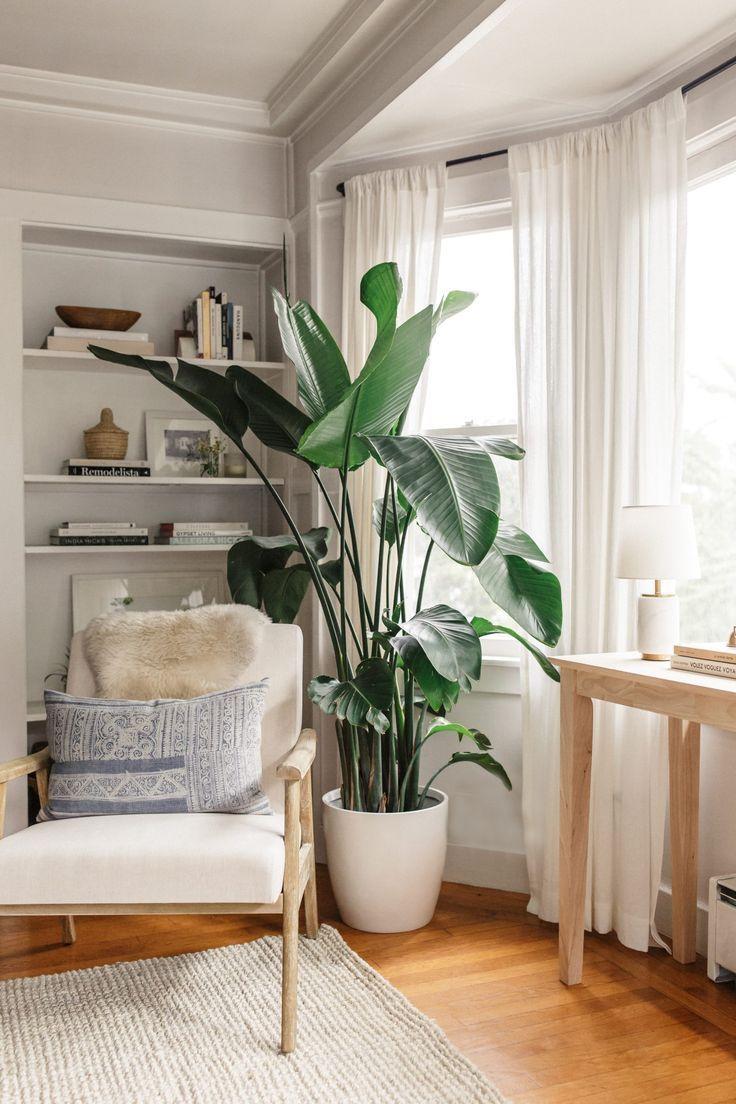 Favorite Indoor Plants - Harlowe JamesHarlowe James