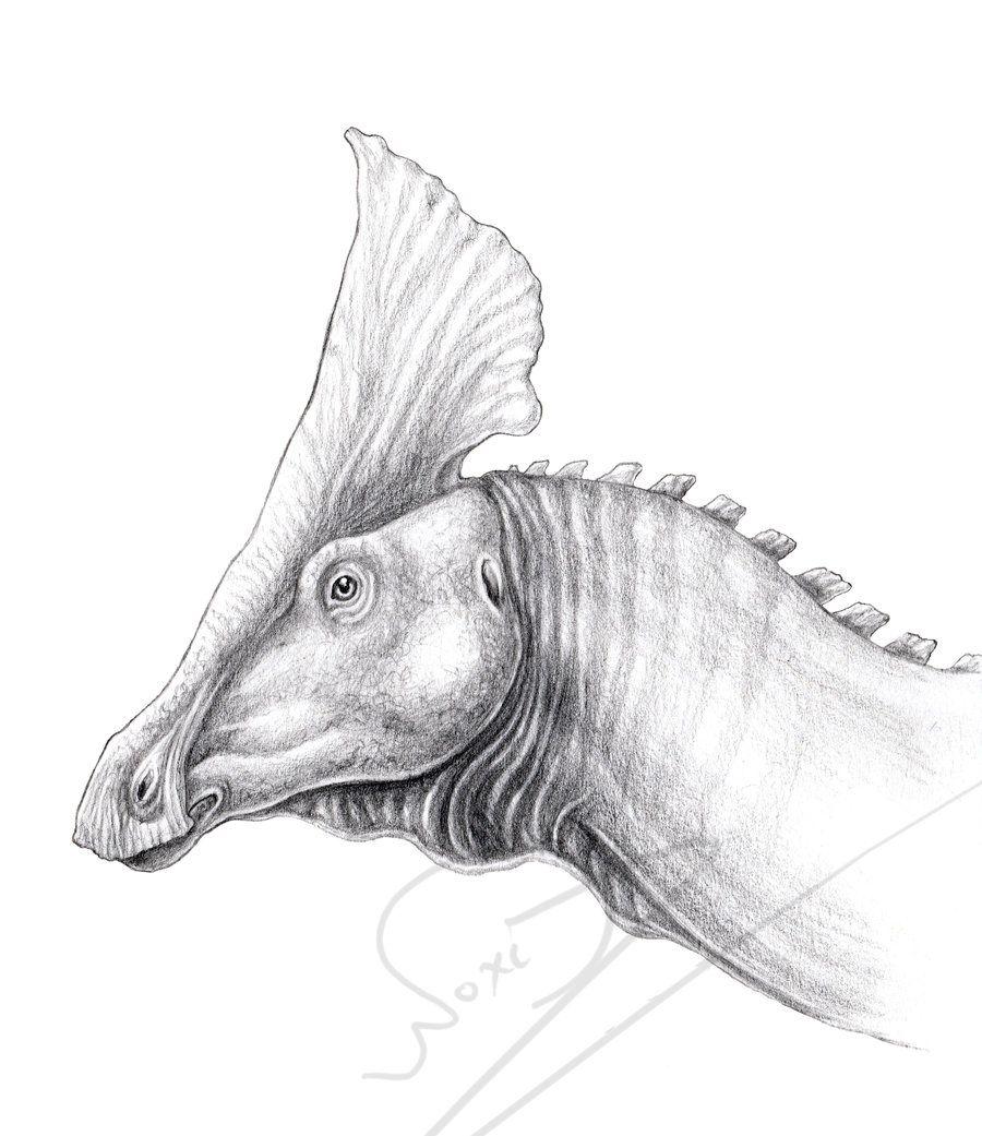 Plesiosaurus 40 Jpg 1798 721 Jurassic Park World Prehistoric Animals Jurassic World