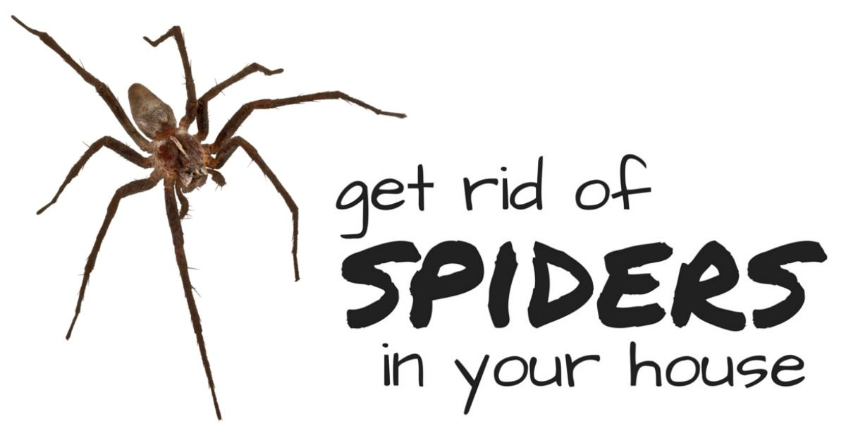 How to get rid of brown recluse spiders i can teach my