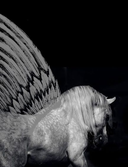 Mirage Ania S Granian Winged Horse A Gift From Her Father For Her Sixth Birthday