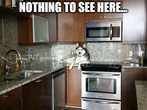 https://de.johnnybet.com/golden-star-casino-bonus-code-1?fancy=1#picture?id=11076 #nothing #tosee #here #husky #kitchen #follow