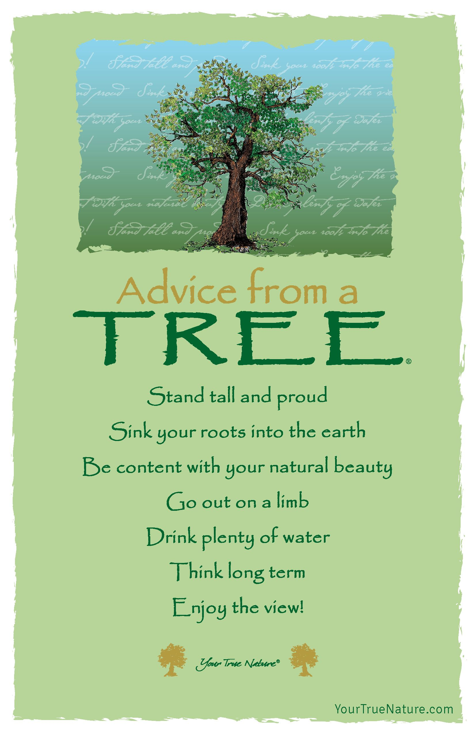 Advice From A Tree Postcard Your True Nature Tree Quotes