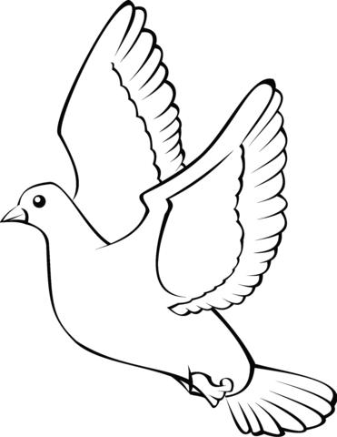 pin op duif