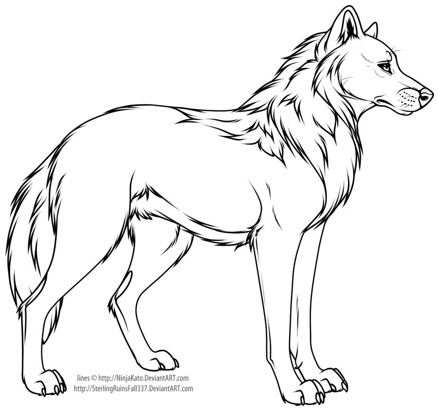 Line Drawing Wolf : Cartoon wolf or dog line art by ninjakato on deviantart
