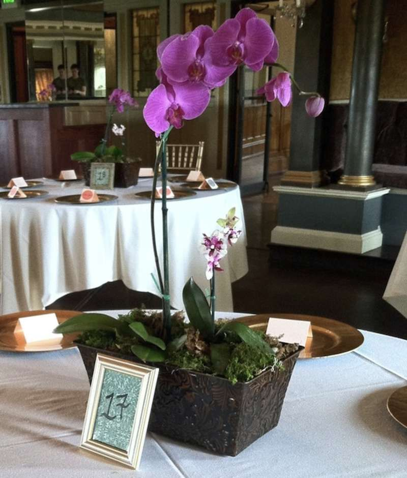 Potted plant wedding reception flowers orchid