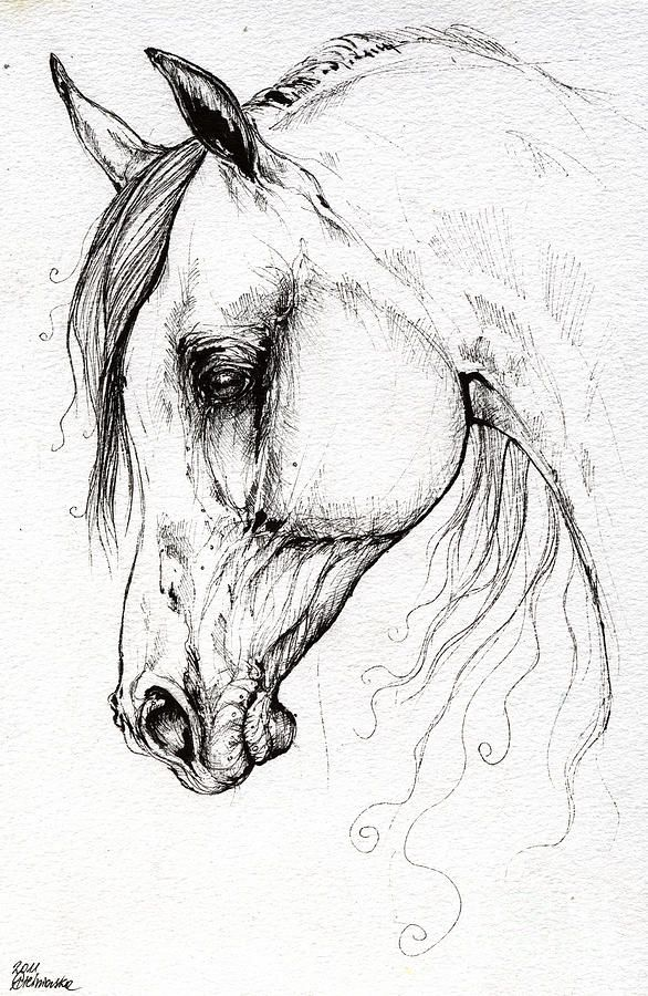 Related Image Horse Drawings Horse Art Horse Drawing