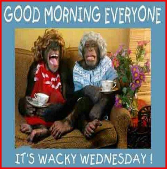 Wednesday Good Morning Good Morning Wednesday Wacky Wednesday Morning Memes