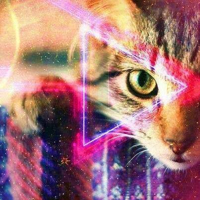 #cat #triangle