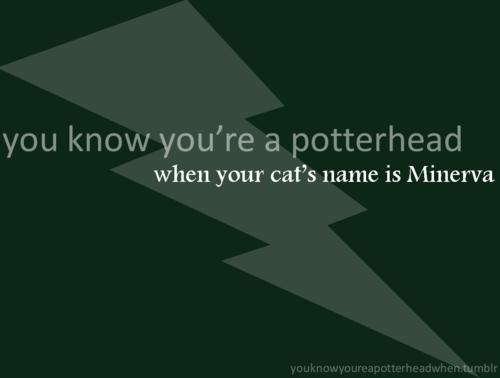 Potterhead. :P