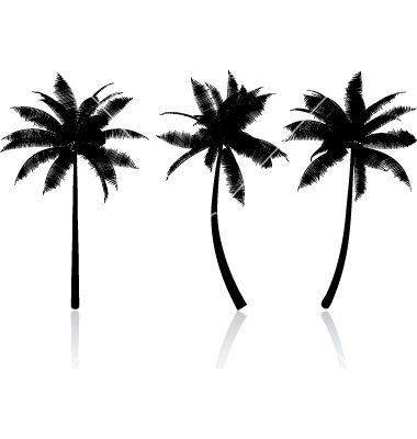 Palm tree graphics vector | Tropical Vectors | Pinterest ...