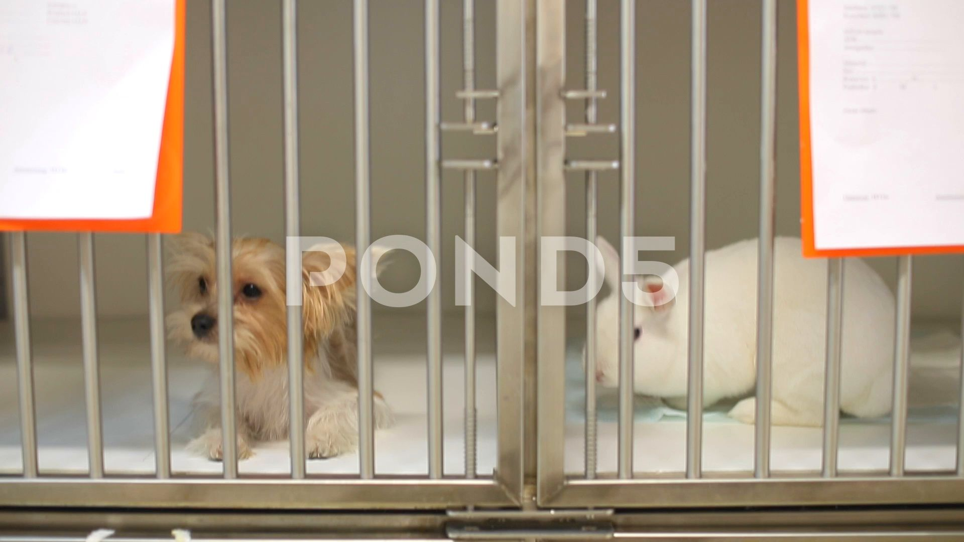 Young Woman Veterinarian Cares For Animals Dog And Rabbit Stock Footage Ad Veterinarian Cares Young Woman Pet Dogs Pet Care Dogs