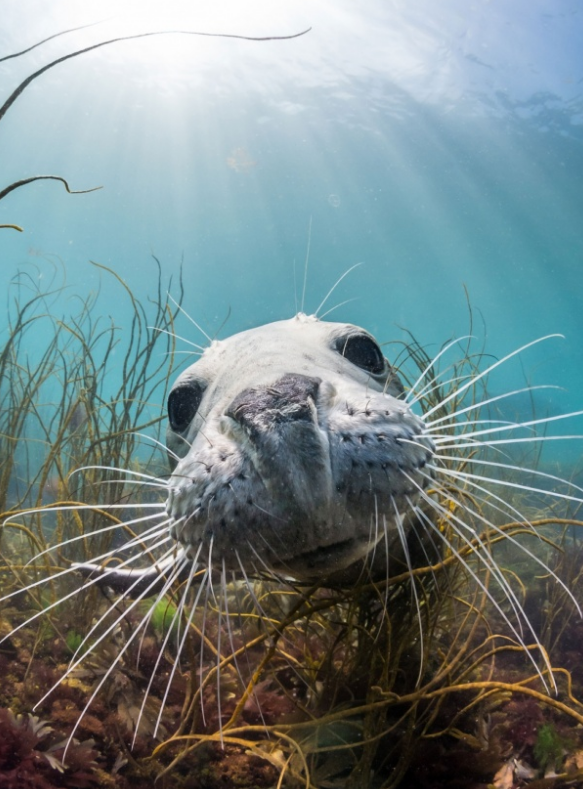 Stunning underwater photography: competition winners – in pictures http://gu.com/p/43d7z/stw   #nature #photography