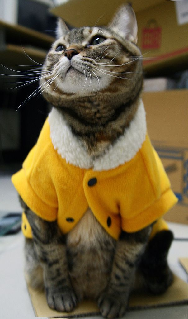 I LOVE CATS IN CLOTHES YEAH I LIKE CATS SO