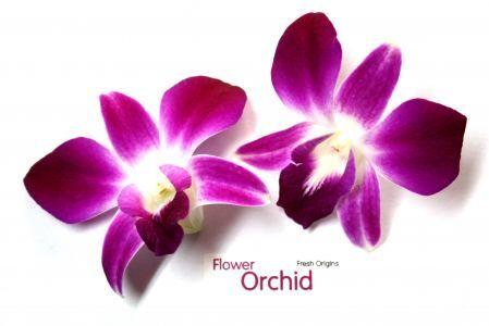 Edible Flowers Fresh Origins Orchid Flower Edible Flowers Polymer Flowers