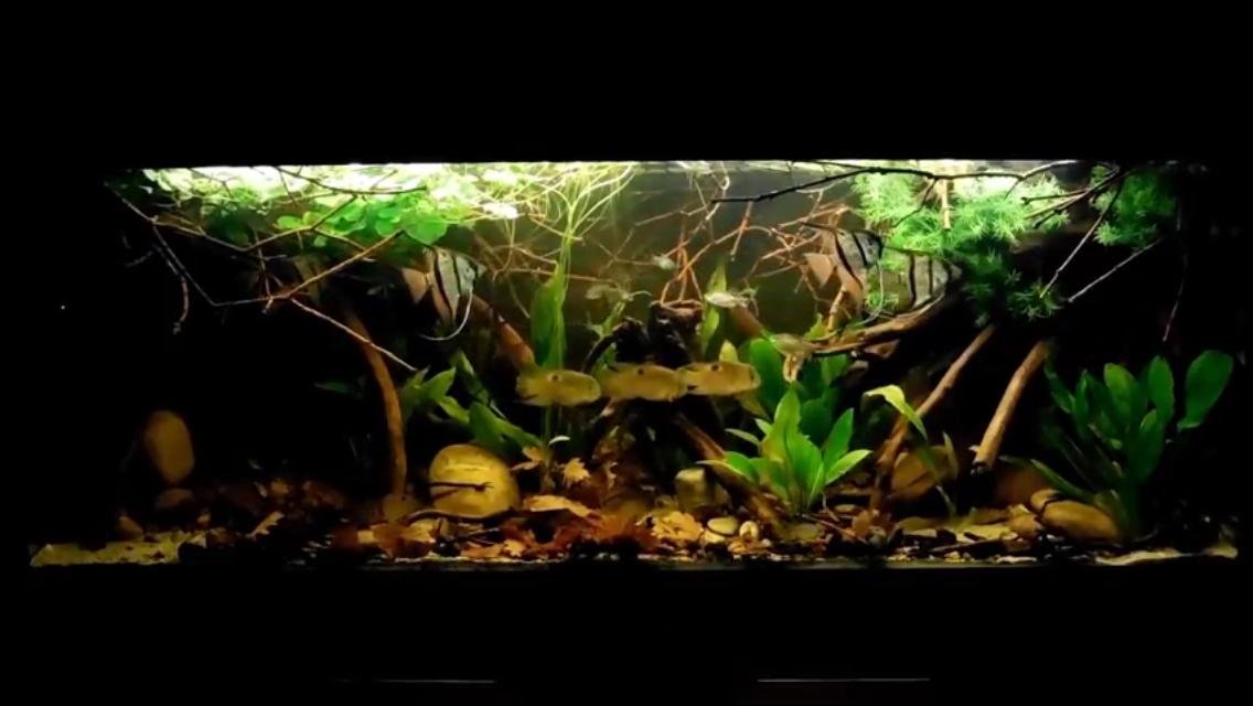 450 liter aquarium south america biotop aquascape pinterest aquarium biotope aquarium und. Black Bedroom Furniture Sets. Home Design Ideas