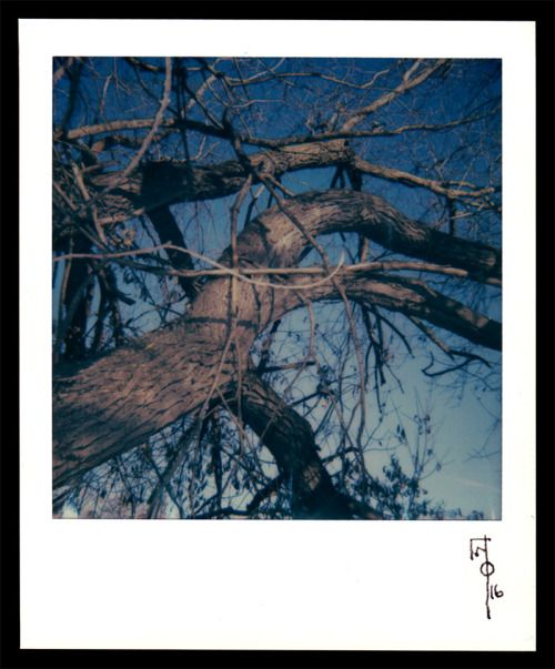 """wallacepolsom: """"Wallace Polsom, Tangled and Twisted (20 November 2016), instant photo taken with a vintage Polaroid Sun 600 LMS and Impossible Project 600 colour film. Photo was taken on a clear, sunny afternoon with the Sun's lighten/darken control..."""