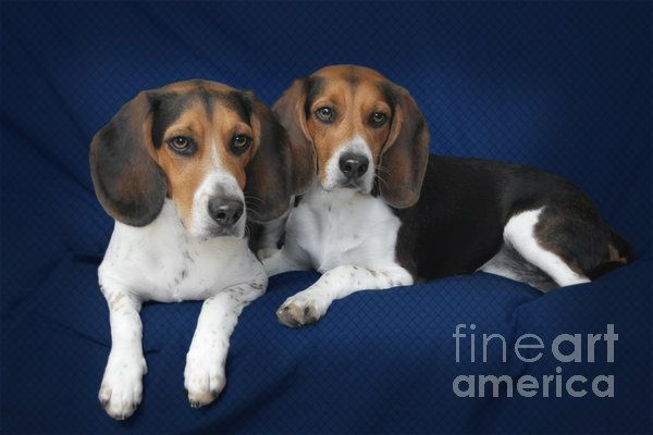 Two Brothers By Christine Till Cute Animals Fine Art America Pets