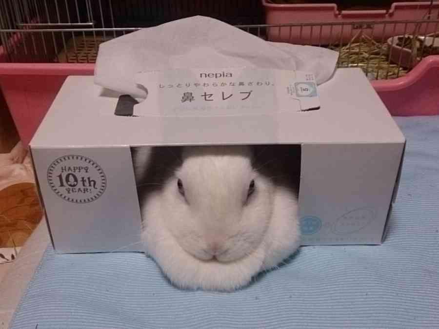 私が 鼻セレブ だ 可愛すぎる動物 かわいいウサギ 動物