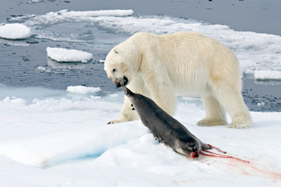 Animals That Live in the Arctic | Tundra Animals Polar Bear ...