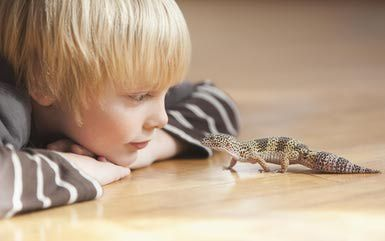 22 Great Name Ideas for Your Pet Lizard | Animals | Pet