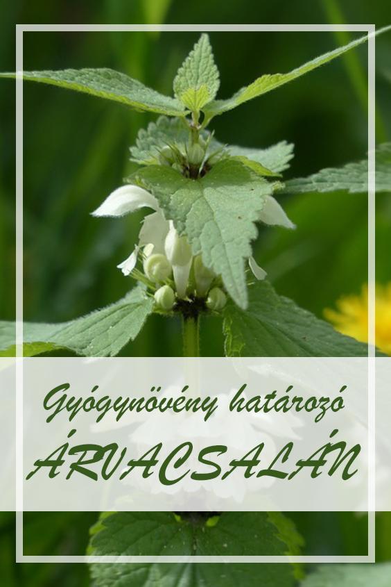 fogyás természetes gyógynövények felhasználásával si fogyás marion