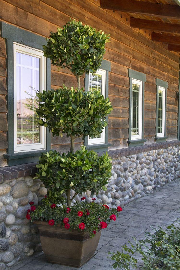 pflanzen ligusterhecke baum pflanzkuebel fassade holz stein alpin