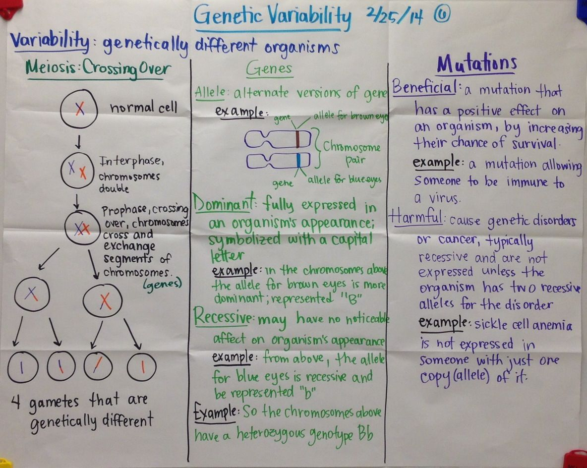 Genetic Variability Biology Glad Anchor Chart
