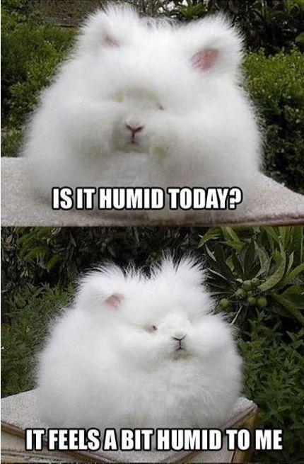 humidity...