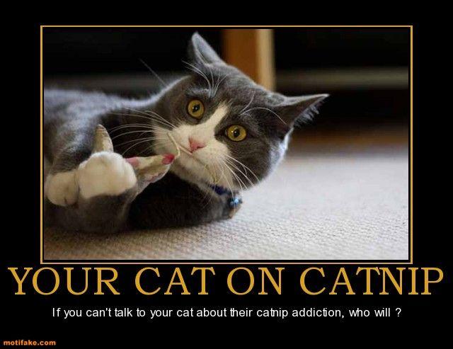 Pin By Karma Moksha On Lol Cat Memes Funny Cat Memes Cat Language