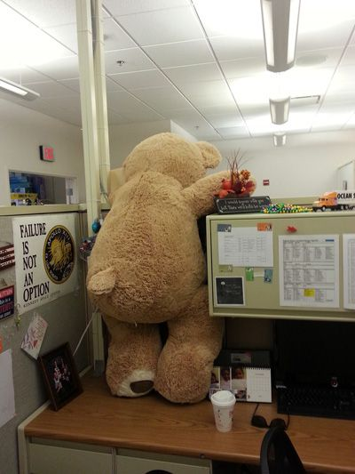 Its Freaky Friday At Ocean State Job Lot Teddybear Is Trying To Make His Great Escape